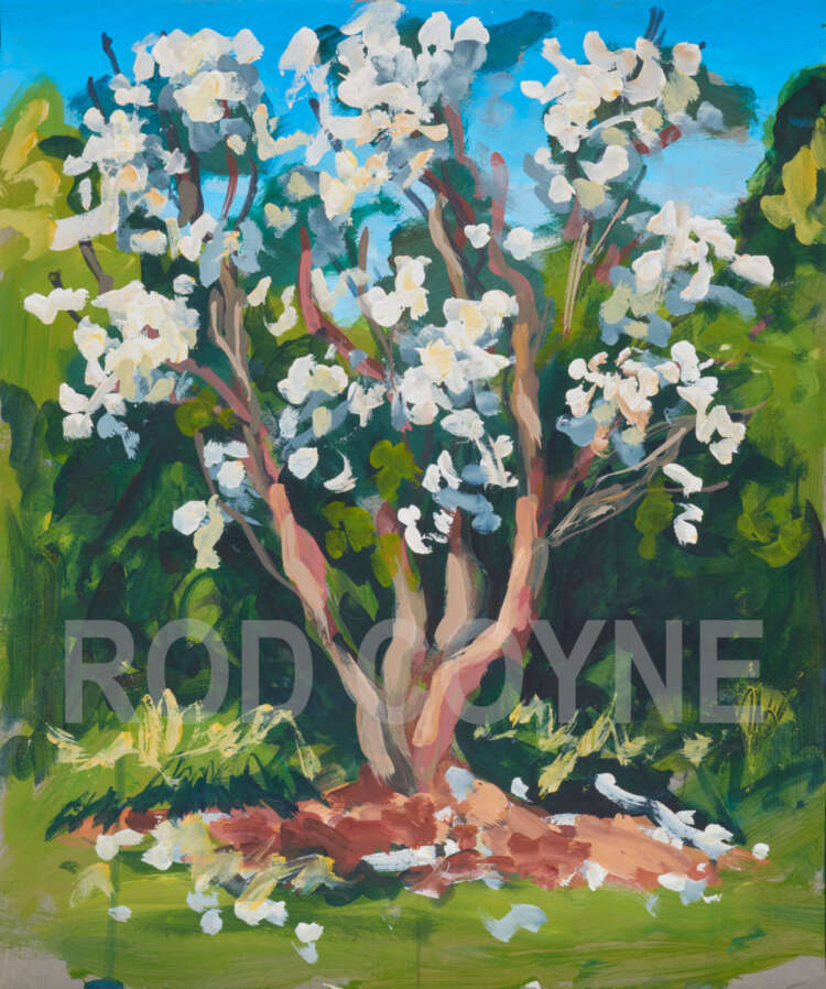"artist rod coyne's landscape painting ""white rhodies"" is shown here, watermarked."